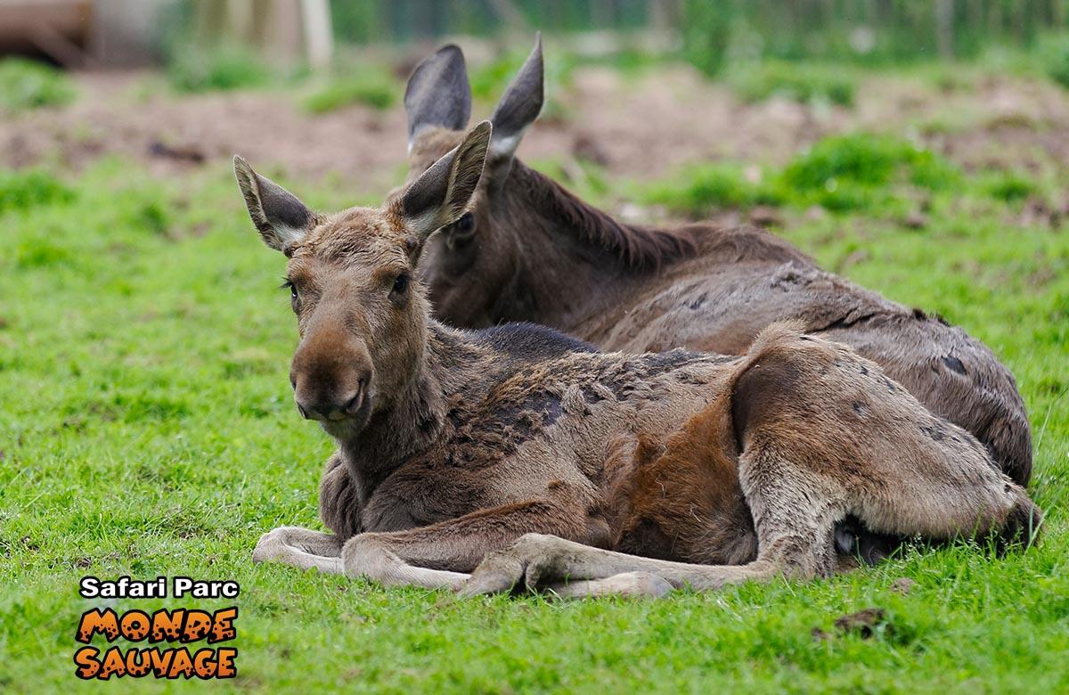 Monde sauvage safaripark aywaille de dieren het park immersion nord am - Le monde sauvage meubles ...