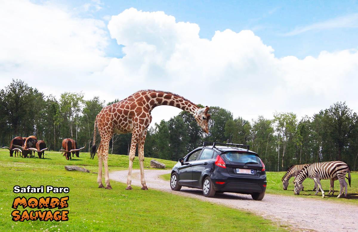 Monde sauvage safari parc aywaille parc animalier zoo le parc parc anim - Le monde sauvage meubles ...